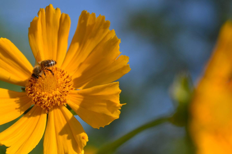 Bee-Family Honig - Herkunft