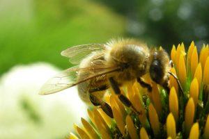 Bienenhonig, Bienen, Blüten, Blumen