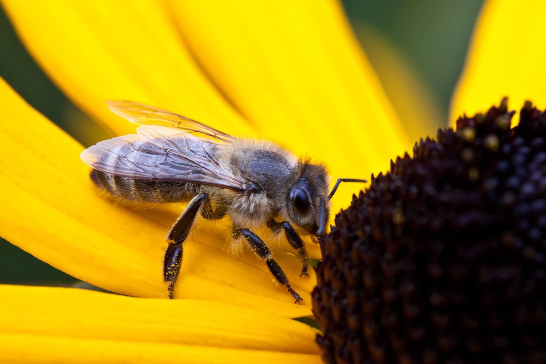 Bee-Family Förderungen für Bienen