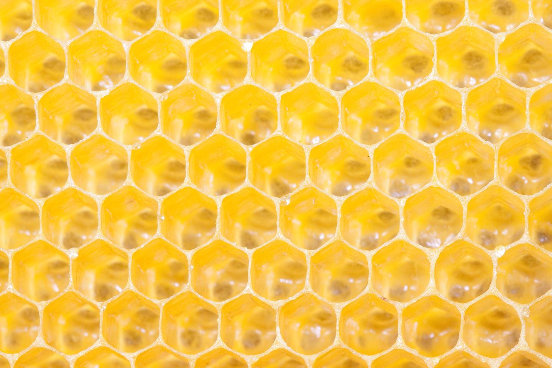 Bee-Family Patenschaft für Bienen