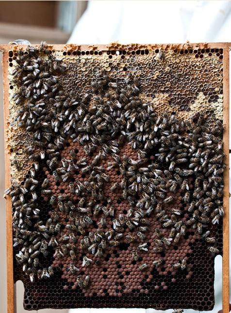 Gesunde Bienen, köstlicher Honig