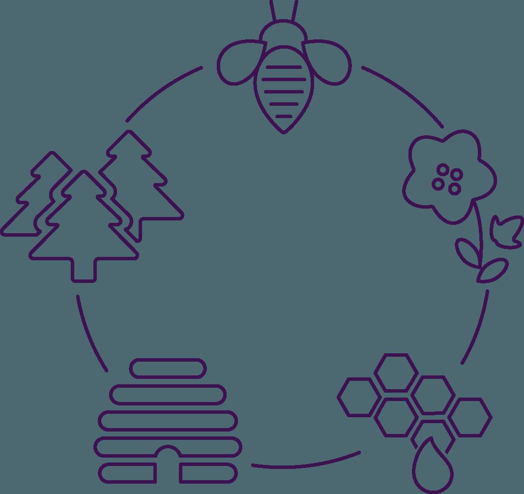 Bienen Kreislauf